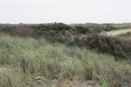 Over view of the Flaauwe-werk sea dike, the Netherlands. Photo courtesy of Dr. Janny Peters, Radboud University. Note, in addition to Solanum dulcamara, it is likely that most of the other plants on the dunes have at least some eXtreme characteristics.