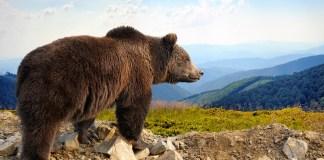 Avoid Wild Animals When Mountain Biking