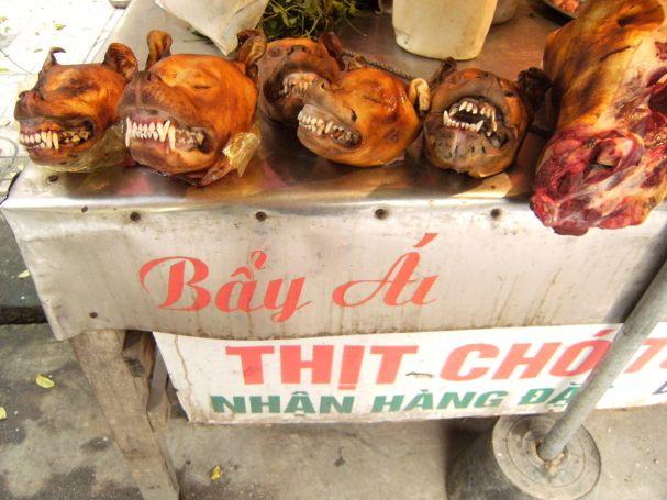 vietnam-jana