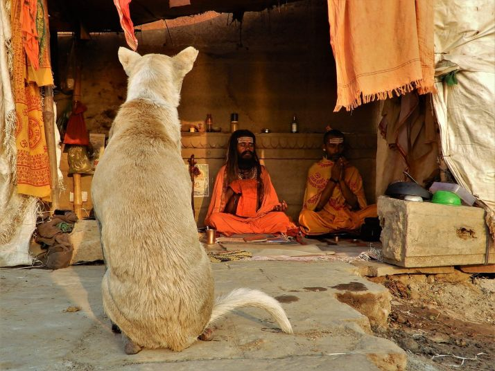 Perro enfrente de dos sadhus meditando, Benarés, Varanasi, India
