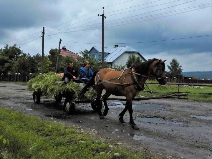 Carreta de caballo, Krasne, Ucrania