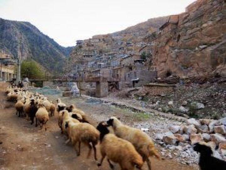 Rebaño kurdistán Pálangan