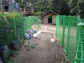 A kind of mini-zoo here.
