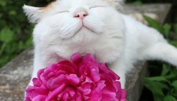 a cat sitting on top of a flower