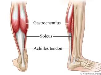 aşil tendonu nedir