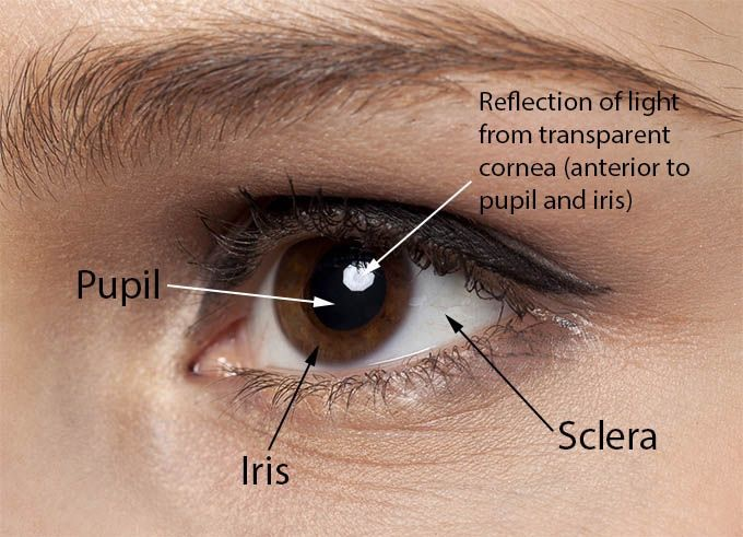 Color Of Your Sclera Is A Cue For Your Health Attractiveness And