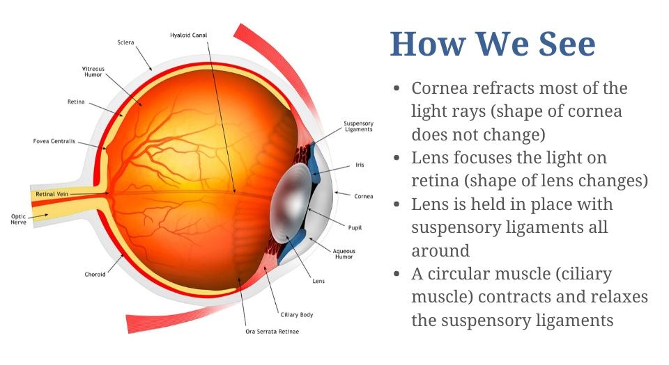 Presbyopia mechanism image