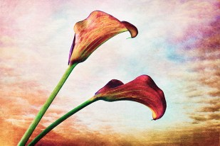 """Finished work """"Two Callas"""" with masked in background textures."""