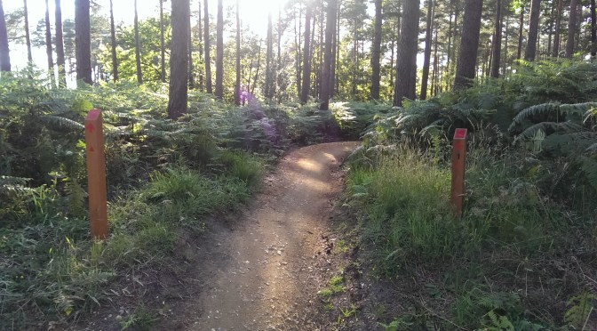 EyeCycled the Swinley Forest RED Mountain Bike Trail