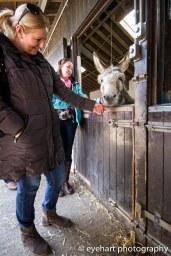 Donkey Spring Fair 2016-8