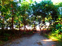 We walk through the trees to discover a quiet, perfect Tortola beach