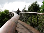 The boomslang curves of the Tree Canopy walkway at Kirstenbosch Botanical Gardens
