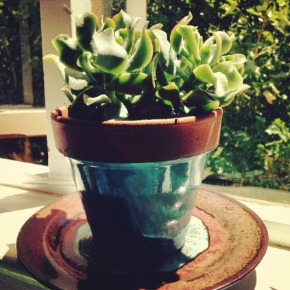 My repotted succulent