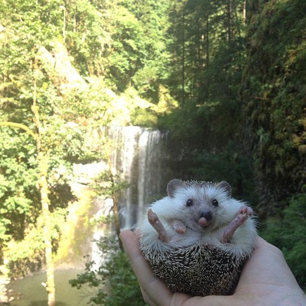 biddy-cute-hedgehog-adventures-22