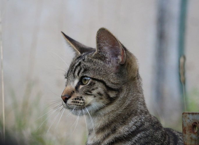 cat-942984_1920