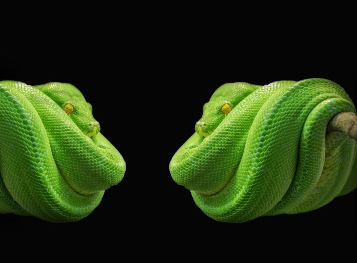 python-564817_1920
