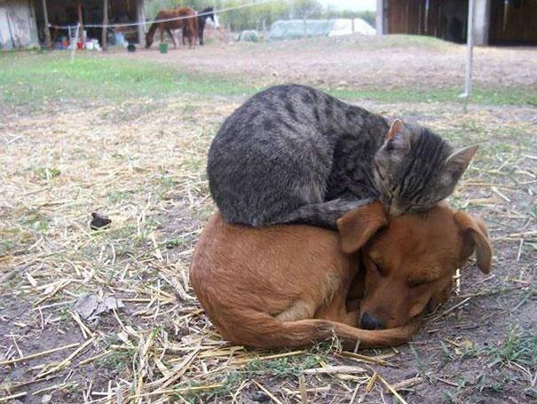 sleeping-cats-125-57d7b09922a9f__605