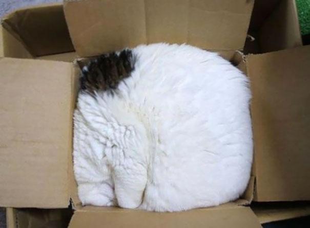 sleeping-cats-2-57ce77ceca4e0__605