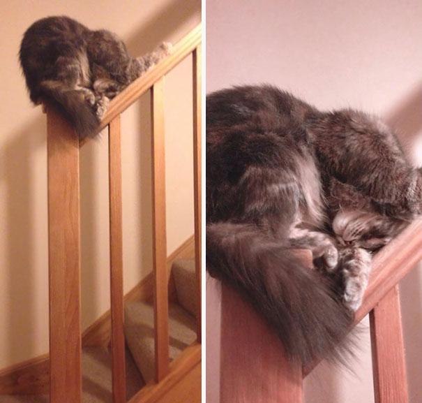sleeping-cats-95-57ced8c9aa920__605