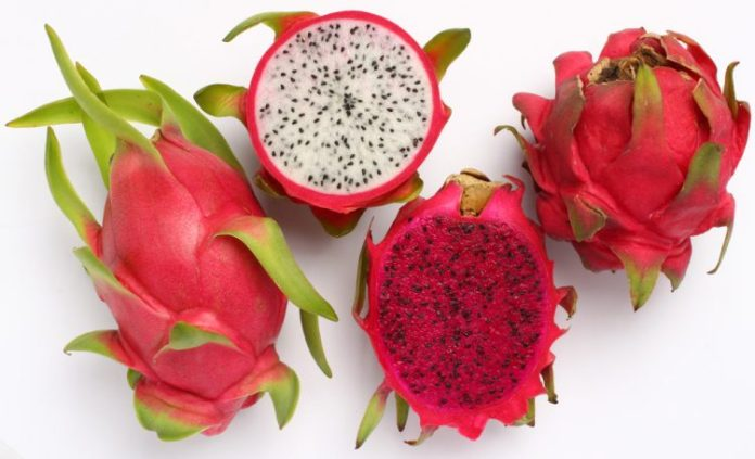 story-of-vietnam-dragon-fruit-1361