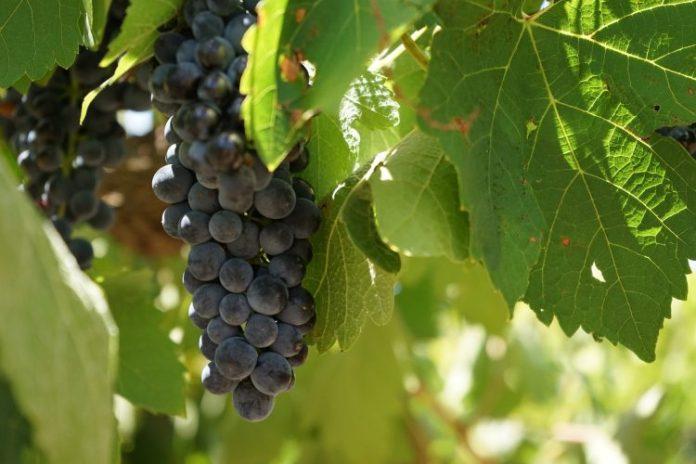 wine-1300182_1920