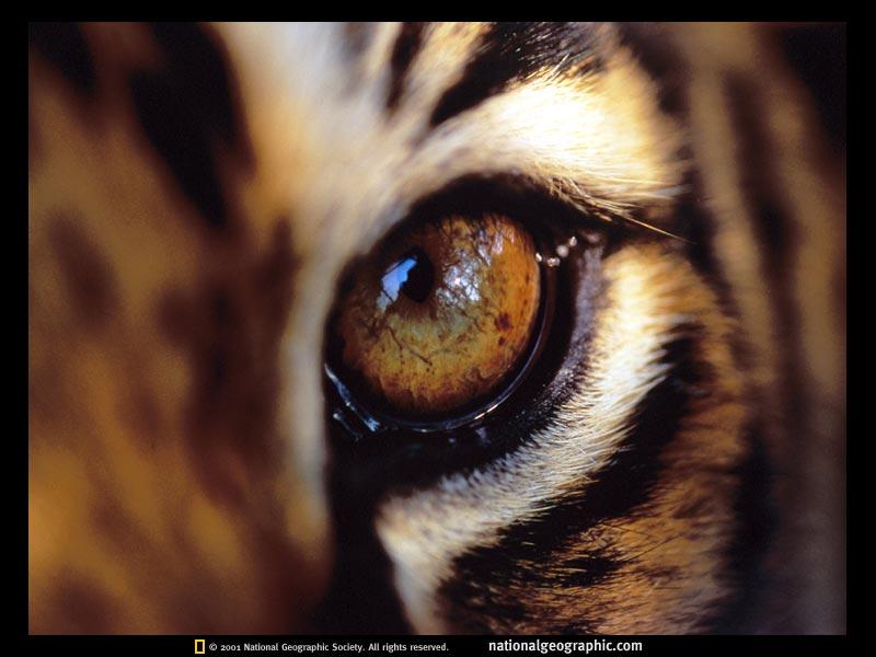 the feline gaze