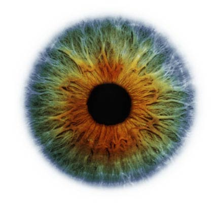 iridologists eye