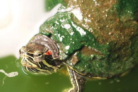 Two-decade-old turtle stands test of time