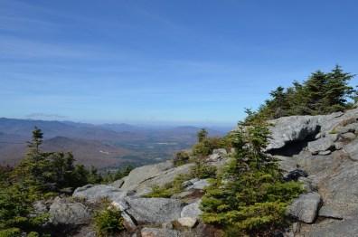11 trees rock valley
