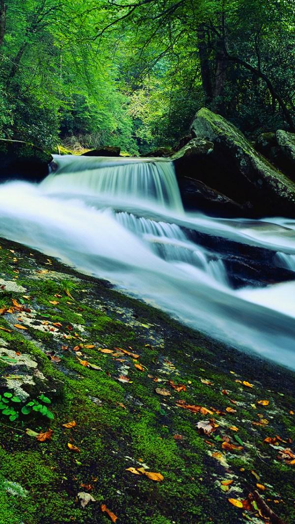 beautiful nature landscapes woodland