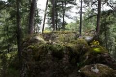 Anne De Carbuccia - Enchanted Forest