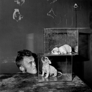 roger-ballen-Puppies in fishtanks, 2000