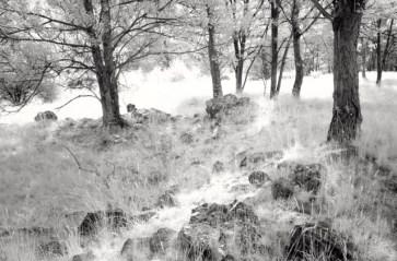 ROMANELLA Bianca alberi_oltre il visibile