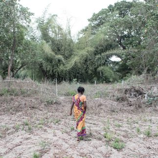 India, Tamil Nadu, May 2018. Laalgudhi village. Mallika, standing in the middle of the field, where her husband Pallicham committed suicide by hanging himself in January 2017. Because of the extreme dought, the crop was destroyed and the family got into debts.