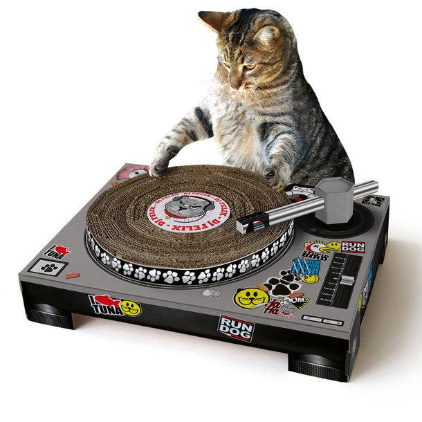 4 bijzondere speeltjes voor je kat  EYEspired