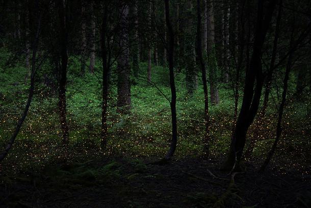 Ellie Davies maakt door sterren verlichtte boslandschappen