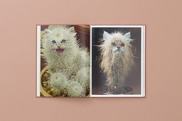 Katten en planten in 1 boek  EYEspired
