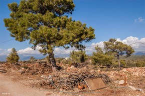 Clay pots and woodpile on roadside with pine tree and blue sky in background