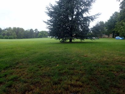 Our tree on the driving range