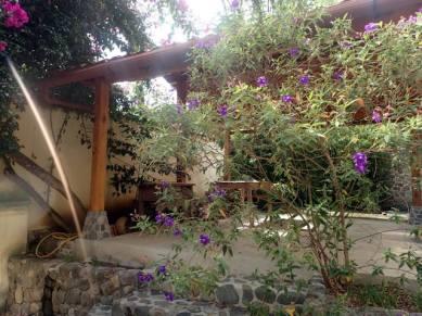 Our back garden area