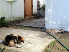 Doggie neighbours