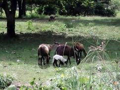 Random livestock