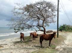 Horses roaming the road