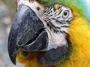 Papugarnia - papuga