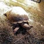Żółw lądowy - Papugarnia