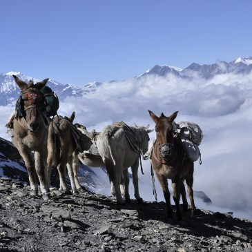 A Complete Guide To Annapurna Base Camp Treking