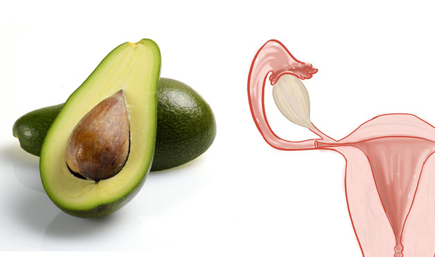 03-Avocados-UterusFoods-That-Look-Like-Body-Parts-1