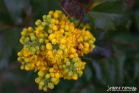 Bud bouquet