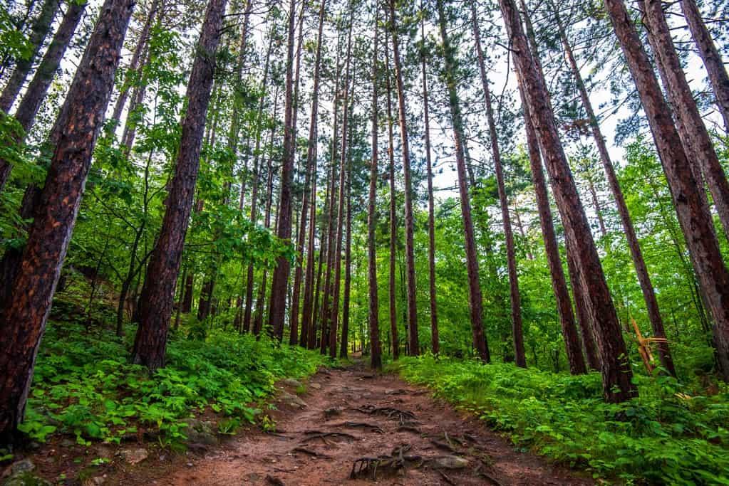 Upper Peninsula Hiking: Hike Sugarloaf Mountain Now 2020