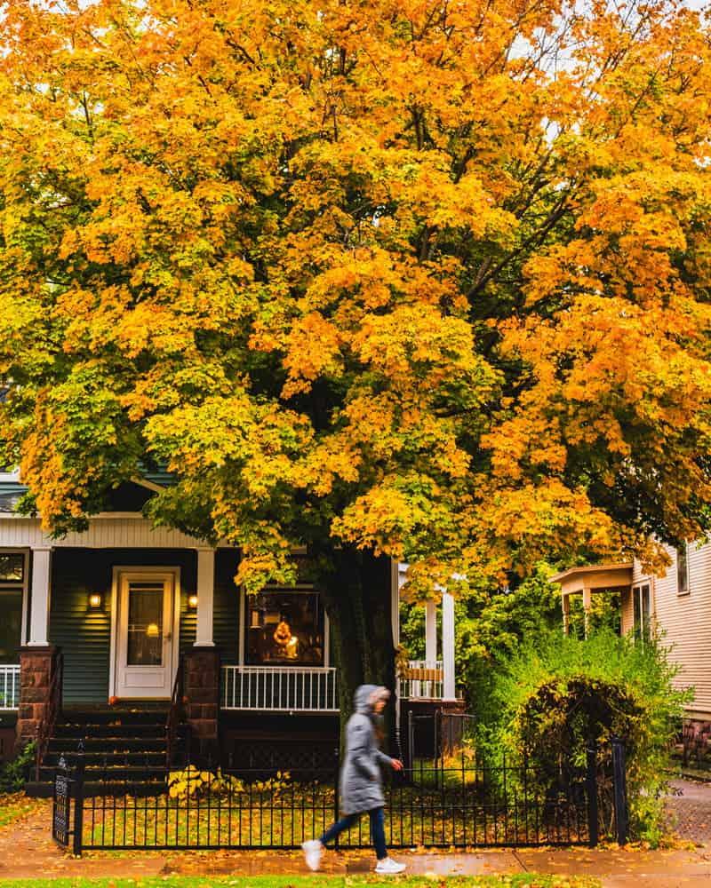 Michigan fall foliage